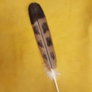 Mature Golden Eagle Hand Painted Feather